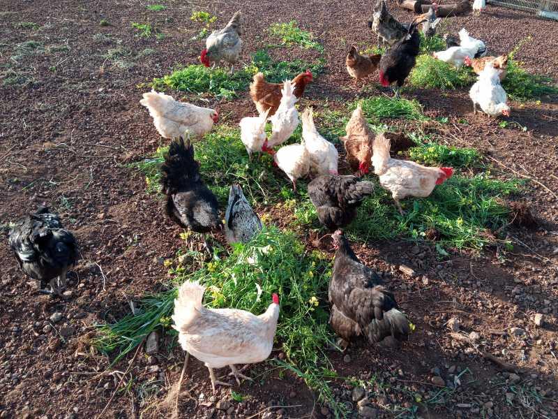 Huevos Camperos, vista 1